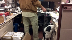 One of our Canine Detection & Inspection Services' dogs, Luke, during an office inspection